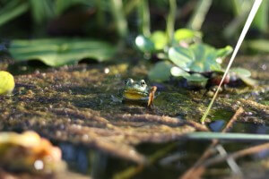 Frog (2/2)