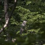 Wild Bird #1 (4/7)