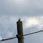 Wild Bird #2 (1/1)