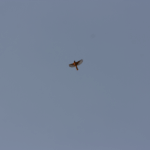 Wild Bird #4 (1/1)