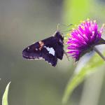 Butterfly / Moth? (4/4)