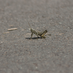 Grasshopper 2/3