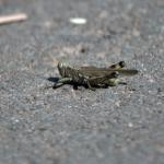 Grasshopper 3/3