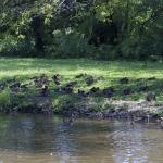 Ducks! 4/6