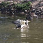Ducks! 6/6