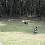 Goose (3/3)